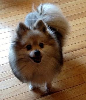 Shelby Dog