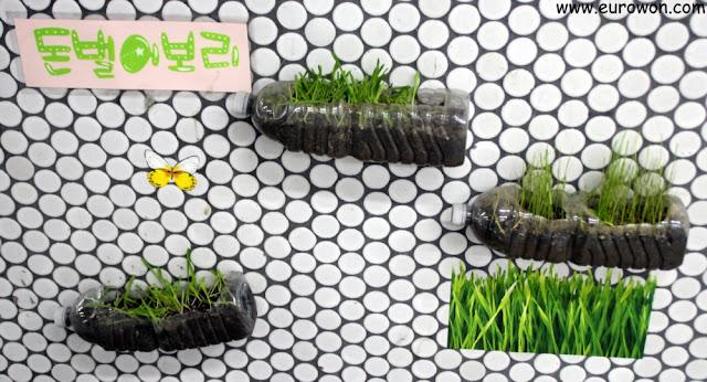 Plantas en botellas plásticas recicladas en el metro de Seúl
