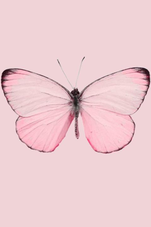 Segmen Blogwalking Pink Ladies 2 Sudah Tamat