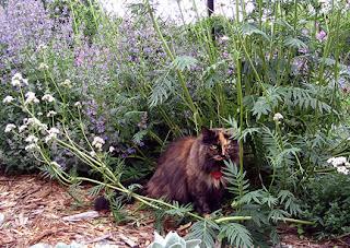 TheGardenFairie.com - Cat Garden