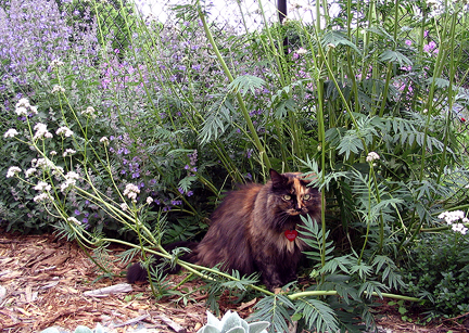 Cat in the garden with purple flowers