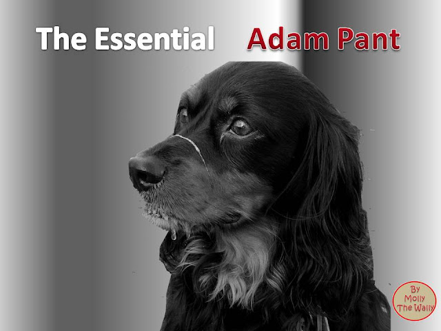 The Essential Adam Ant album cover by Molly The Wally