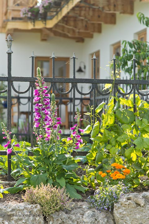 gartenblog geniesser garten bauerngarten landhausgarten. Black Bedroom Furniture Sets. Home Design Ideas