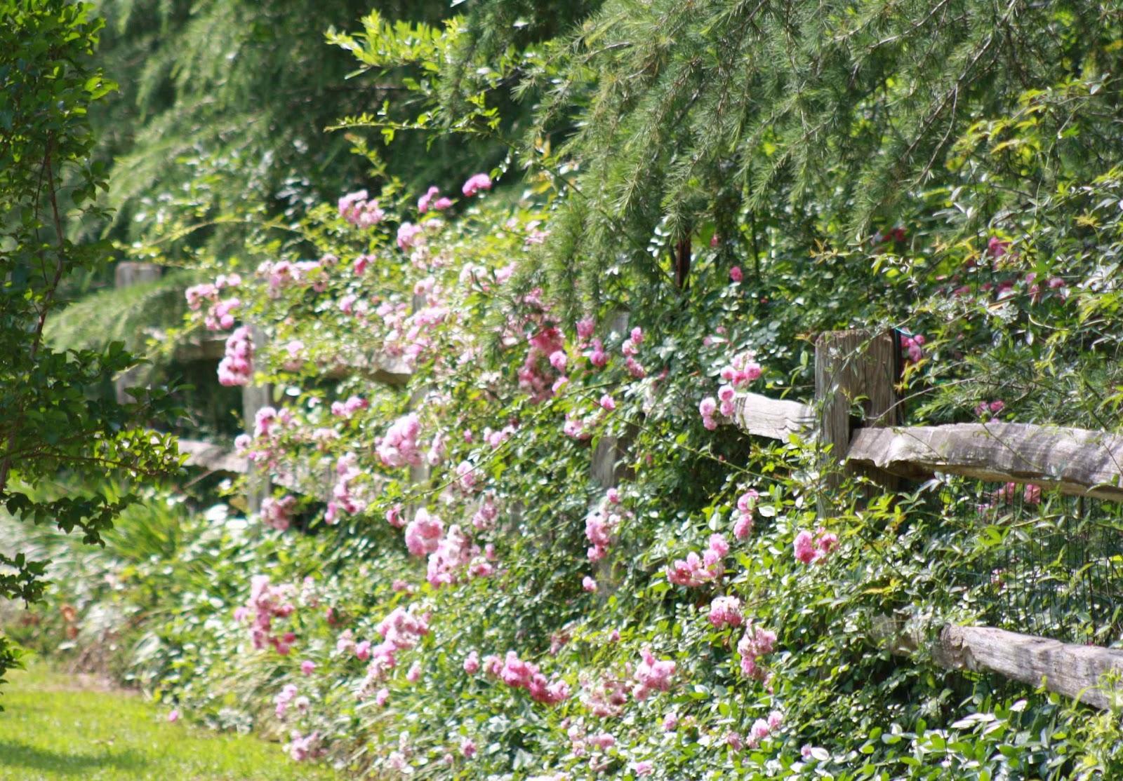 Roses and other gardening joys woodland wonderland garden tour - Rustic flower gardens ...
