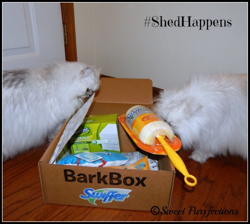 Truffle and Brulee explore the Welcome Home Box from Swiffer and BarkBox #ShedHappens