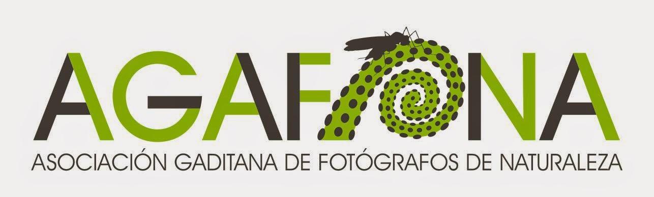 Mi asociación fotográfica