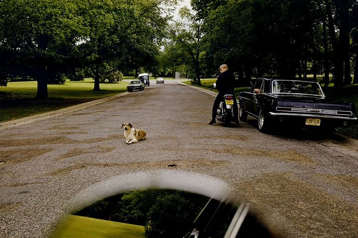 William Eggleston's photograph of a dog in the road