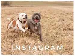 Olemme Instagramissa: