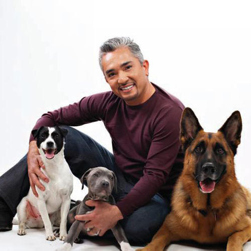 Cesar Millan And Eye Contact With Dogs