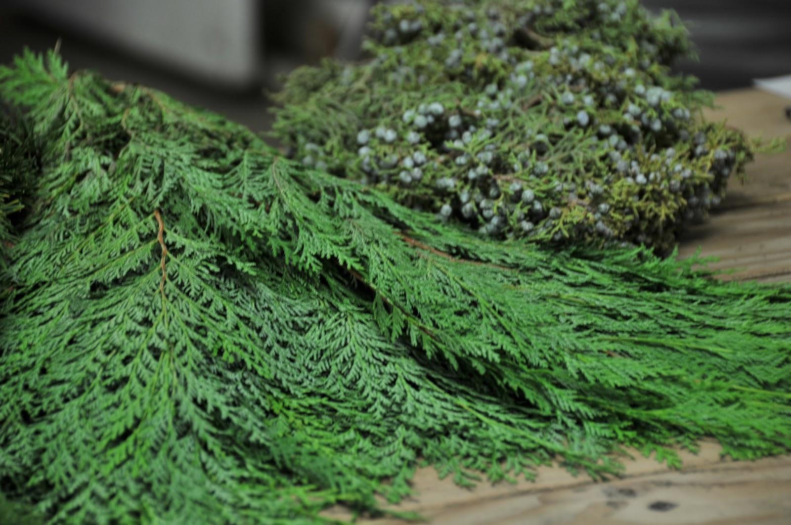 christmas evergreens - An Evergreen Christmas