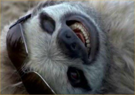 Funny sloths photos funny animals - Funny sloth pics ...