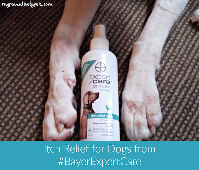 Itch Relief for Dogs from #BayerExpertCare - At Home Pet Care Products available at PetSmart