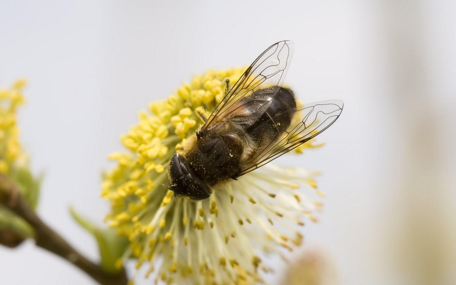 beehive wallpapers - photo #34