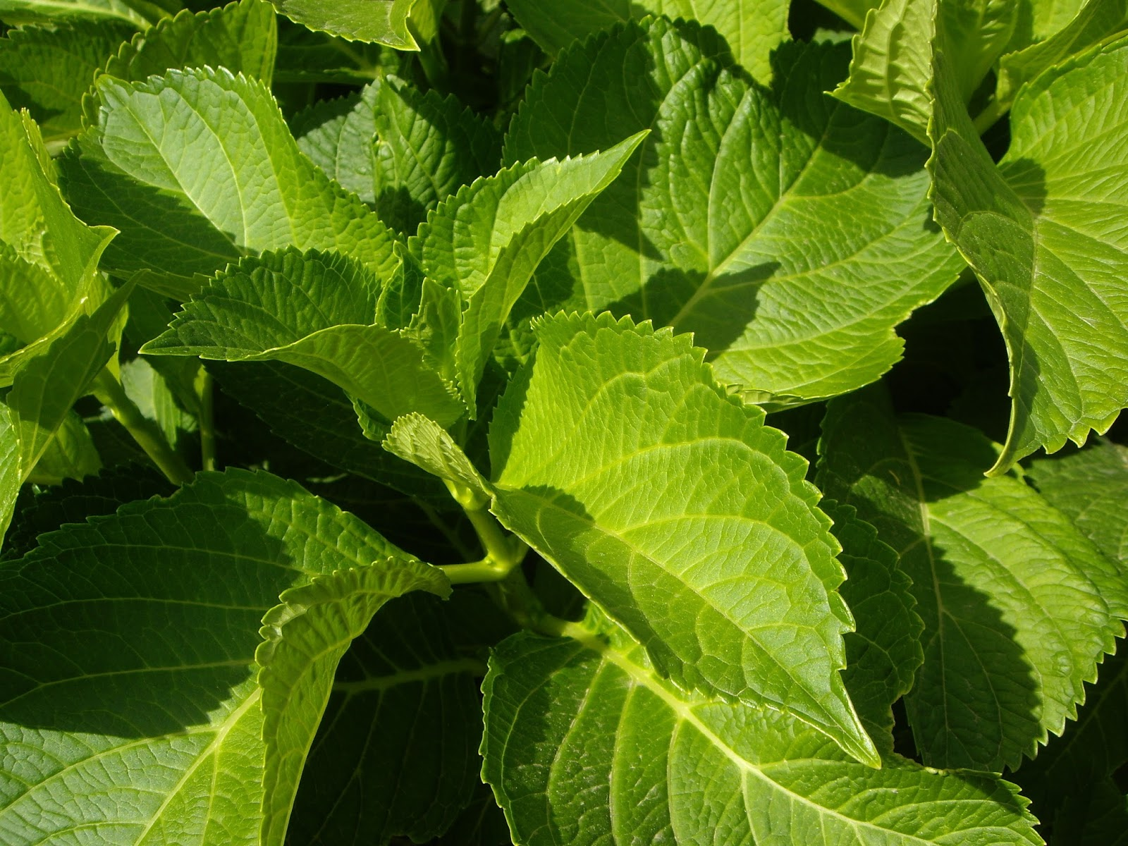 Snap pin bordes flores hojas imagenes decorativas for Plantas decorativas hojas