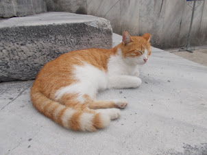"""Stray cat outside """"Sultan Ahmed Mosque(Blue Mosque)"""
