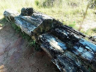 Árvore fóssil no Sítio Paleobotânico da Piscina, São Pedro do Sul (RS)
