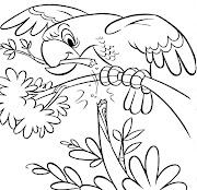 Desenhos para colorir e imprimir (desenho de papagaio para colorir desenhos infantil de animais)