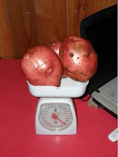 12 сентября, три клубня 2 кг