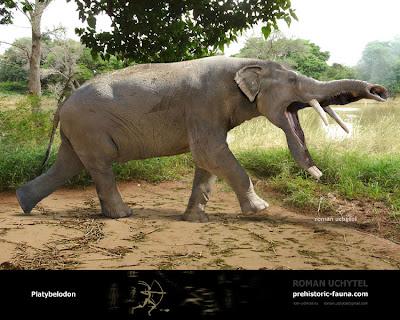 Proboscidea prehistorica Platybelodon