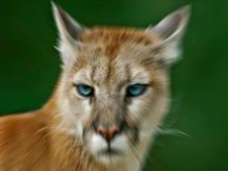 tinder dating cougar danmark