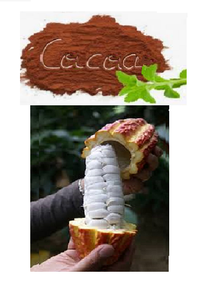 FOR THE PURCHASE OF 10 NOVO SEEDS GIFT 5 COCOA SEEDS FOR GROWING INDOOR