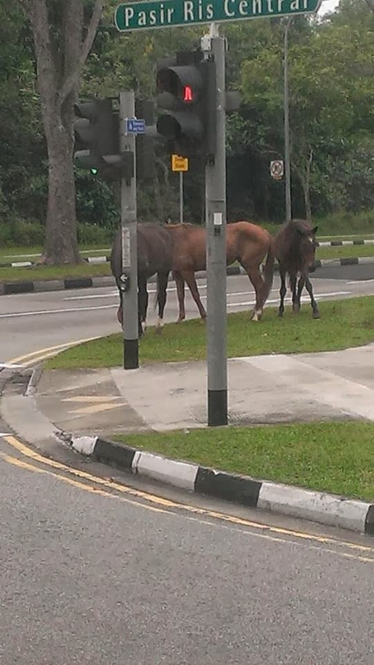 pasir ris horses
