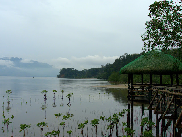 Mangrove Park, Subic Philippines