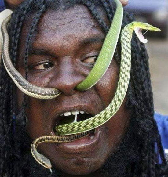 snake man puts live snakes through his nose   visual art