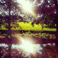 sunshine on canal