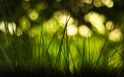 Grass and Blurred Bokeh Lights HD Nature Wallpaper