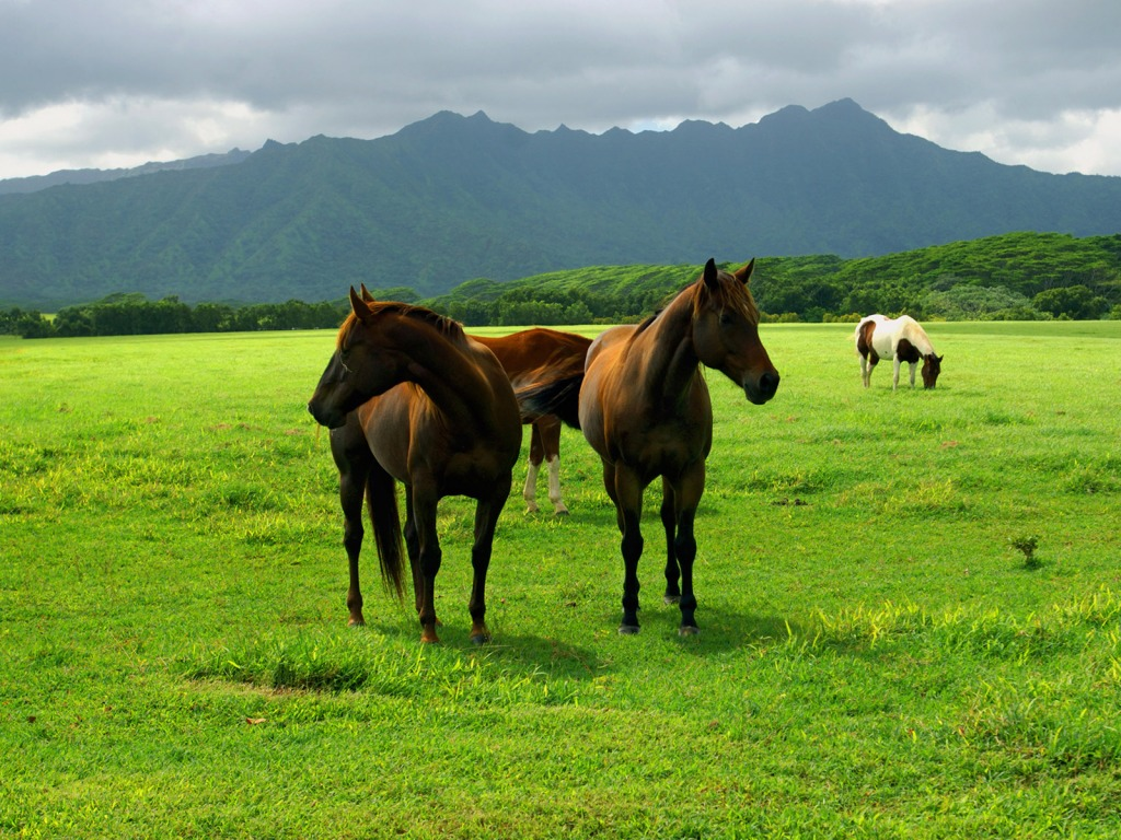 Great   Wallpaper Horse Spring - 2  Picture_808927.jpg