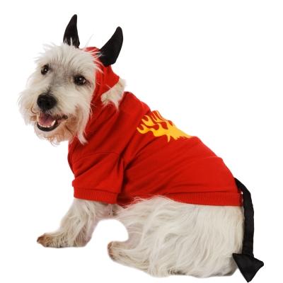 Fotos Graciosas Disfraces Para Perros