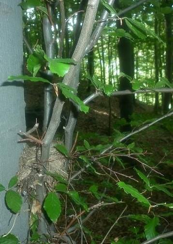 opatrne z hniezda
