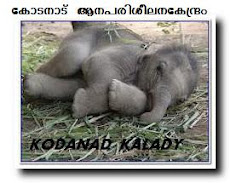 KODANAD ELEPHANT CAMP