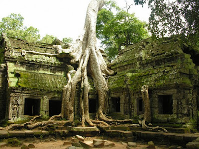 The Trees from Ta Phrom