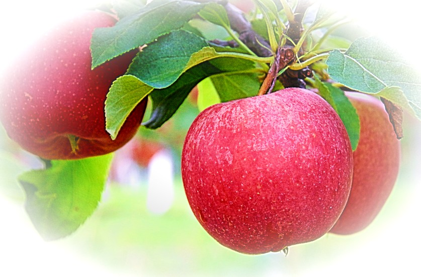 uma maçã ao dia...