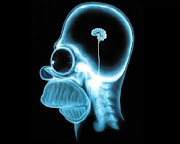 Homer Simpson's Brain. Those of you who read this blog regularly (all three .