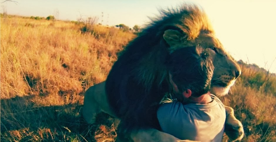 Lion whisperer hugs a lion