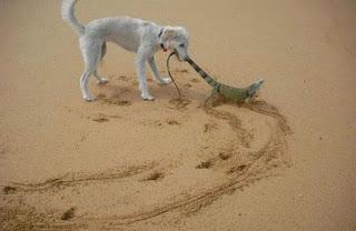 Funny Pro Dog