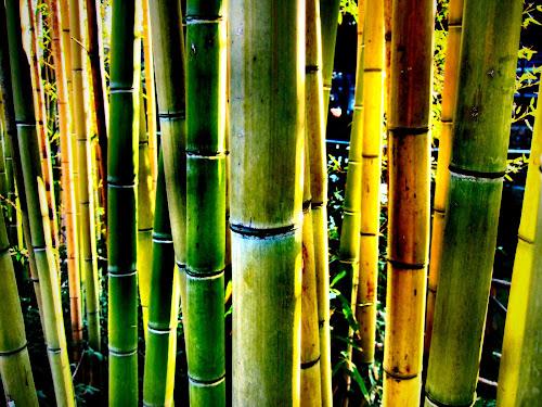 Gambar-Gambar Hutan Bambu Paling Keren