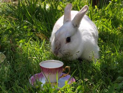white rabbit, fotograf Maria-Thérèse Sommar Härnösand