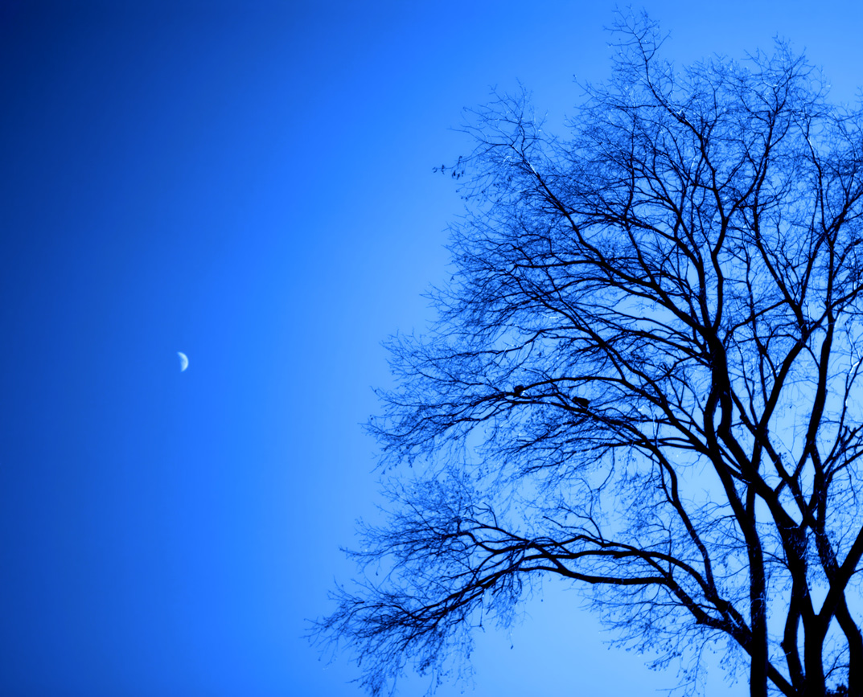 http://1.bp.blogspot.com/-gvhU-oYKO88/TuN9ijwEutI/AAAAAAAAYpU/cXvWRRjfrU8/s1600/Blue+Moon+Light+Wallpapers+%25283%2529.jpg