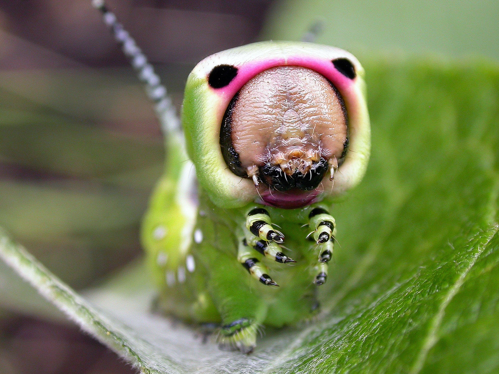 Caterpillar Couture: Fashion and Survival in the Insect World