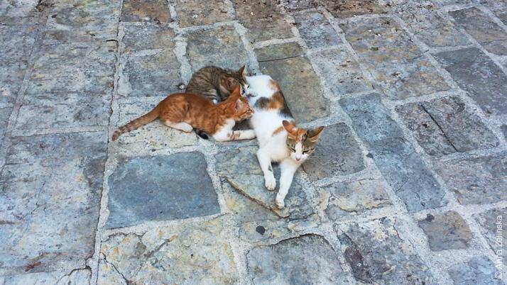 Коты в Старом городе, Будва, Черногория