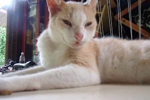 Meu momoso gatinho o Tuco. Ele só tem 08 aninhos!!!! Que gracinha