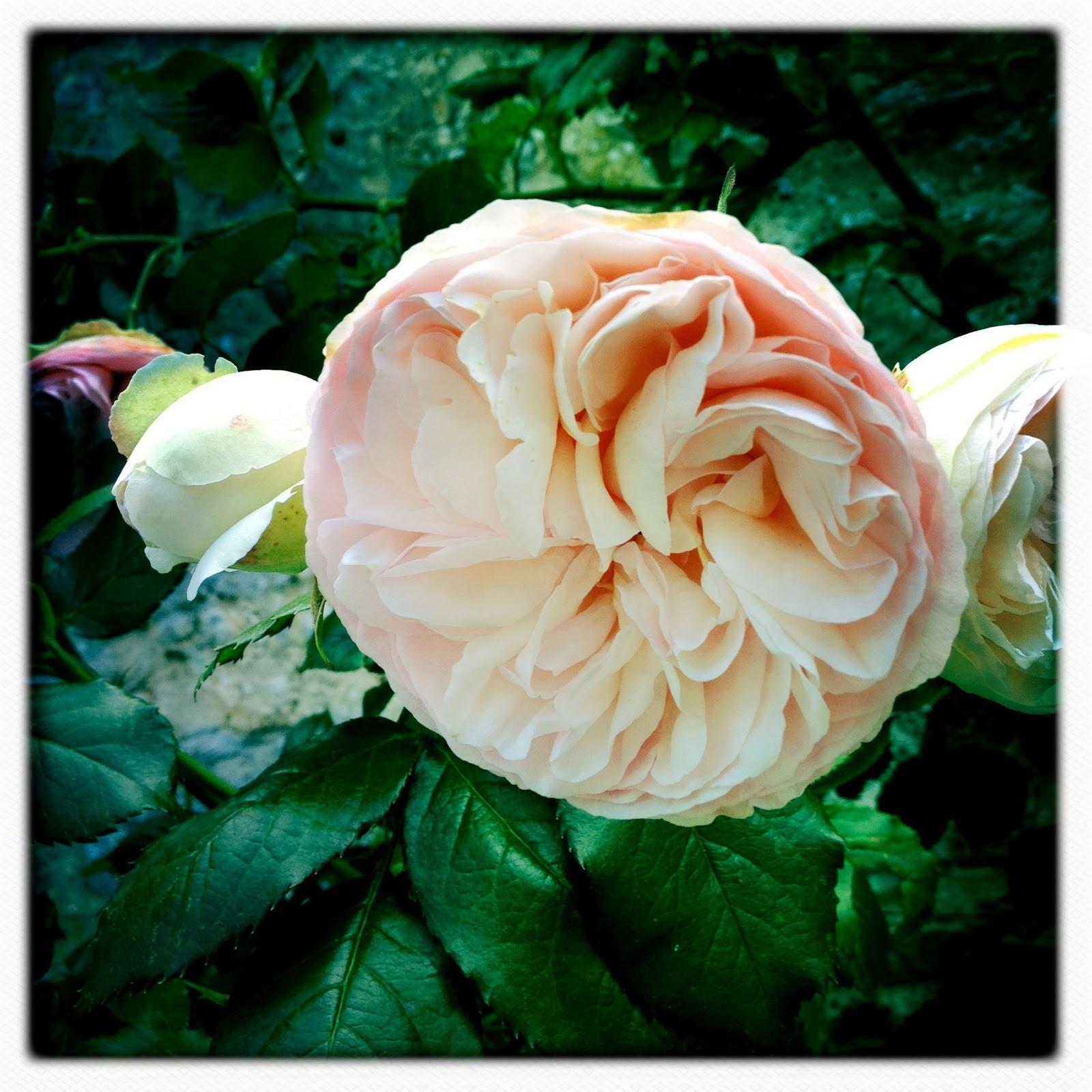 Que faire ce week end juin 2013 - Fete de la rose gerberoy ...