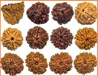Different Types of Rudraksha Beads and Its Significance in Wearing
