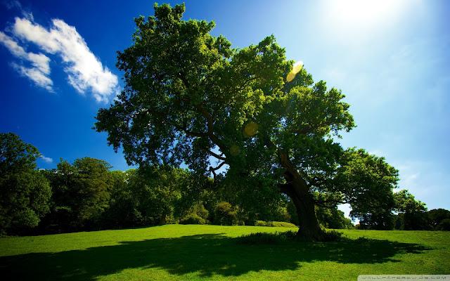 Best Jungle Life tree, nature, landscapes, God