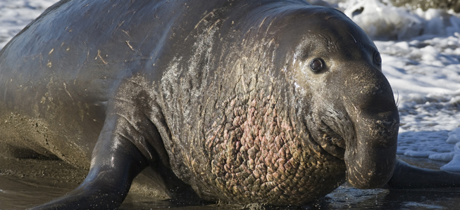 Worlds Biggest Animal | Odd Bizarre