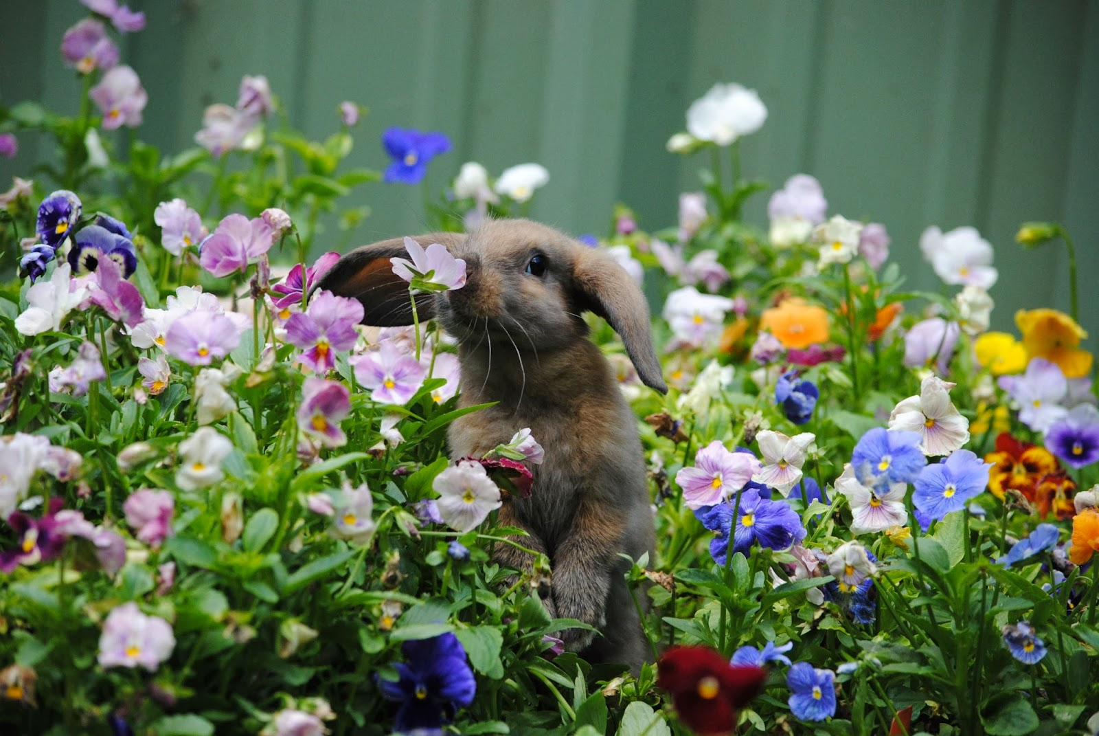 spring jewelry sale bunny smelling flowers